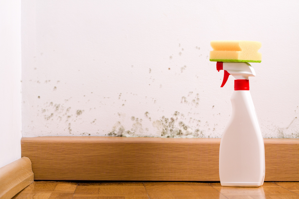 How Mould Can Affect Your Health and How to Correctly Clean It